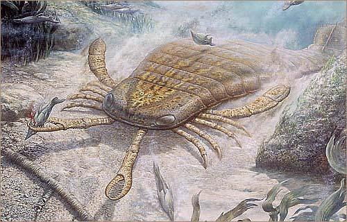 Учёные нашли предка всех ракообразных, насекомых и пауков
